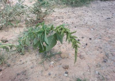 very poor soil