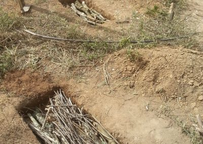 making 'sponges' in degraded soil: twigs, dung, term, leaves