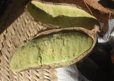 Jatoba nut opened